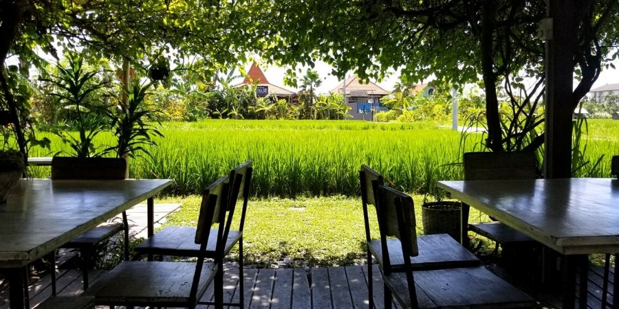 The lush rice fields in front of Nook, one of the best restaurants in Seminyak