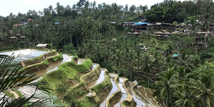 Tegalalang Rice Terrace is one of the largest rice fields in Ubud and the most photogenic