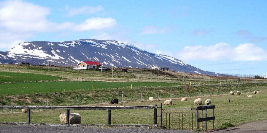 The landscape in Iceland is out of this world! And not to mention all the lush greenery and amazing waterfalls!