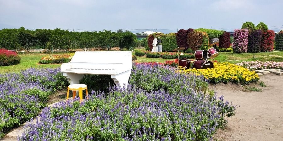 A white piano is staged in the middle of a field of flowers - a perfect prop for music lovers.