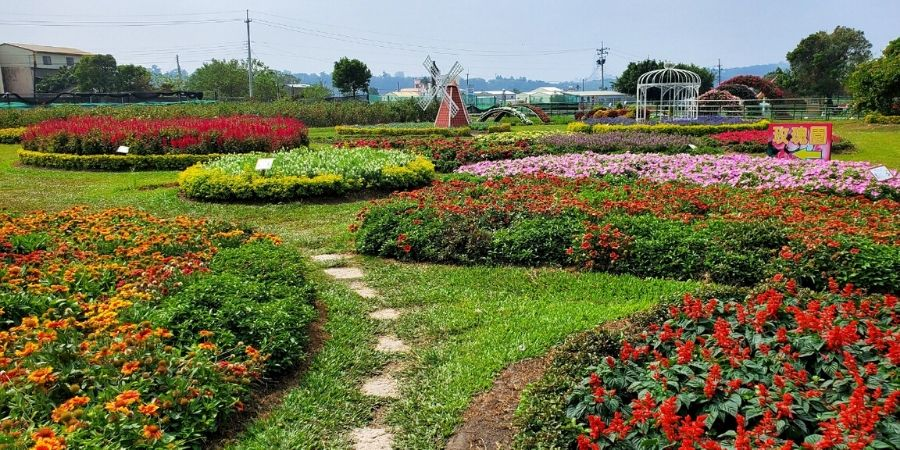 One of many colourful flower farms groomed by professional groomers at Zhongshe Flower Market.