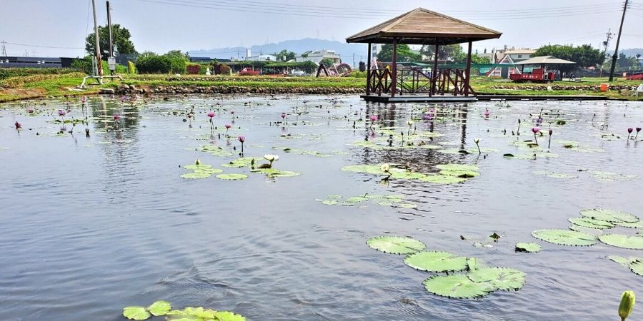 A scenic pond with lily pads and a pagoda nearby.