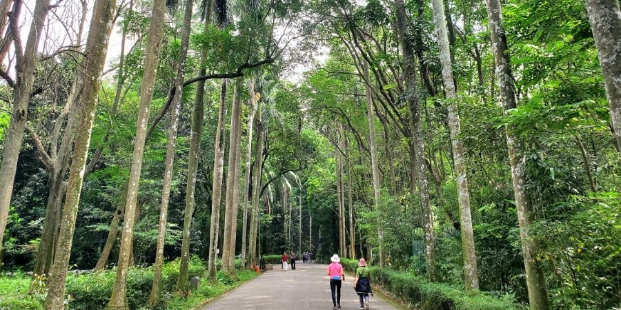 Take a leisurely stroll through many paths in the Botanical Garden in Chiayi.