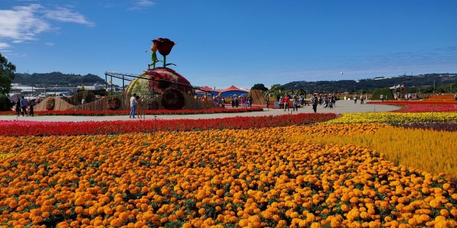 See fields of cosmos and marigolds at Xinshe Sea of Flowers near Taichung, Taiwan.